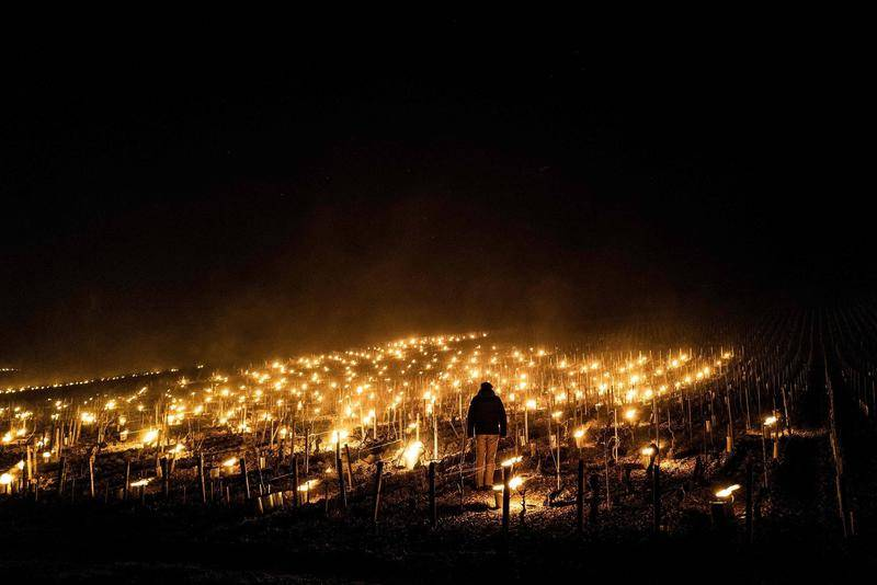 为了保护葡萄不受霜冻伤害,法国葡萄园里点起了蜡烛。图源:CFP