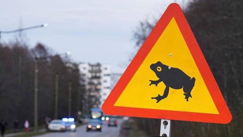 2021年4月13日,在爱沙尼亚塔林的封闭道路上看到描绘青蛙的路标。图源:路透社